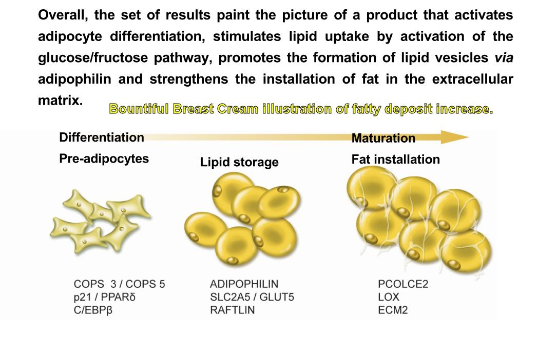 breast enlargement using breast cream